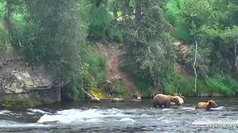22 Jun 2019 First Bear Play of the Season, video by mckate