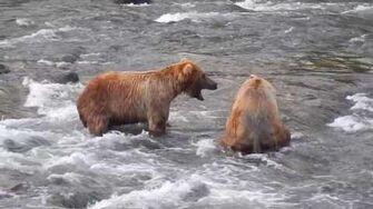 Bear Showdown 89 Backpack & 274 Overflow by Mocha-0