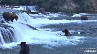 """Unknown """"hump"""" bear fishing the jacuzzi 8 6 2019, video by Lani H"""