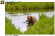 INFO BEARS SEEN 2017.06.21 APPROX 10.54 410 RDAVE COMMENT 2017.06.21 11.09 w PIC 02