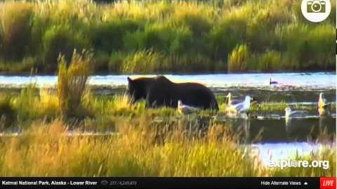 People and a Bear 879 August 26, 2014 video by DTB