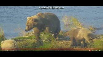 Beautiful sow 482 and 3 cubs ( Smores) P1 28 9 18 by Ratna Narayan-0