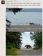 INFO BEARS SEEN 2015.06.08 16.53 856 & 128 GRAZER RMIKE LR COMMENT w PICS