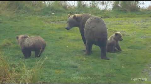 Supermom Bear 402 & cubs 2018 Season by Deanna Dittloff (aka deelynnd)