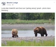 2015.06.09 16.30 856 & 854 DIVOT ARE COURTING BL FB POST