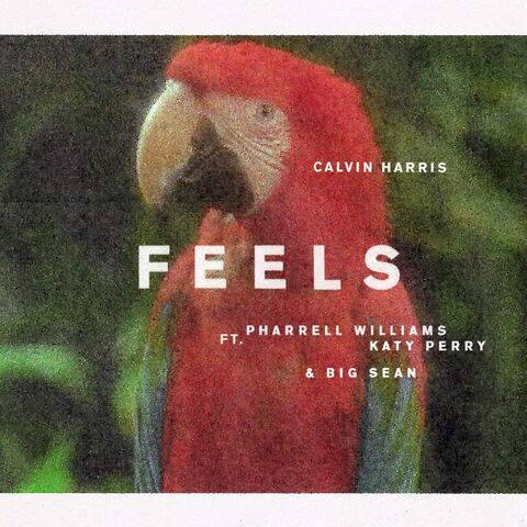 File:Feels.jpg
