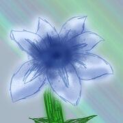 Baulucaflower