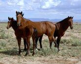 File:Horsepicture1