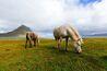 File:Horses