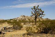 Lancaster, California desert