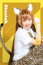 Butai cheetah