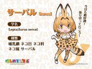 Serval anime intro