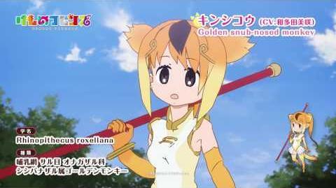TVアニメ『けものフレンズ』ショートムービー キンシコウ篇