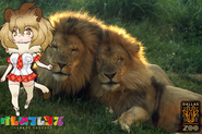 Dallas Zoo and Kemono Freinds Lions