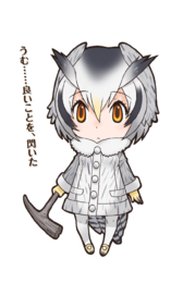 041 - Northern White-Faced Owl