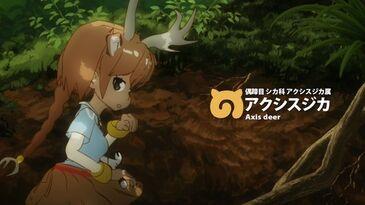 A007 Axis Deer