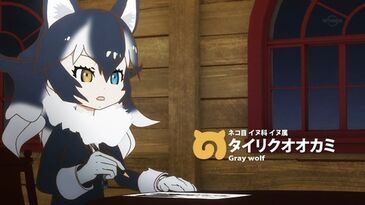 A043 Gray Wolf