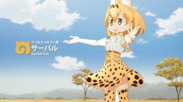 A001 Serval Cat