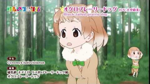 TVアニメ『けものフレンズ』ショートムービー オグロプレーリードッグ篇