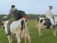 Cowcomp