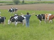 Onewiththecows