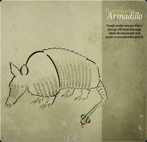 Card Armadillo