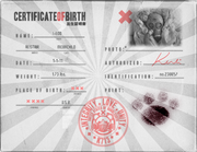I-Loo birth certificate