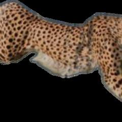 Tiger (png made by @keshaswhore)