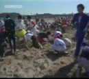 Sand Flee
