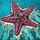 Nautica SeaStar