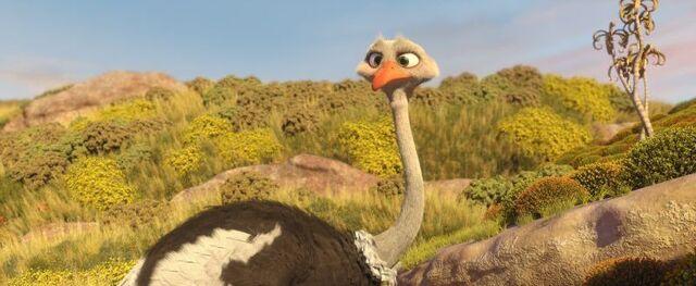 File:Bradley The Ostrich.jpg