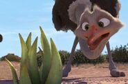 Bradley and cactus