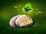 Flea Brains