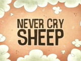 Never Cry Sheep