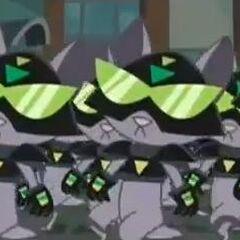 Kat invasion