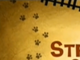 Strange Kat on a Train
