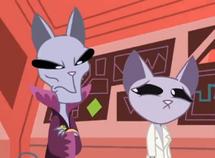 Rey gato y Novia Sr Gato
