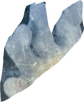 File:4 fingers.JPG