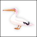 SanDiego Pelican