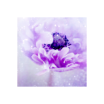 Fayriesakura-icon