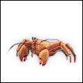 BoraBora Crab