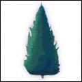 Vail Tree
