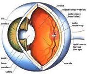 EyeInsides
