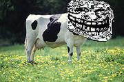 Troll Cow