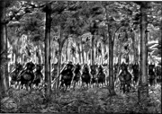 Hi Shin Unit in forest