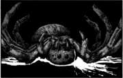 Kei Sha spider dead