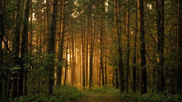 File:Lovely forest.jpg