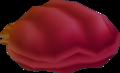 Coquillage Brasier Atlantica
