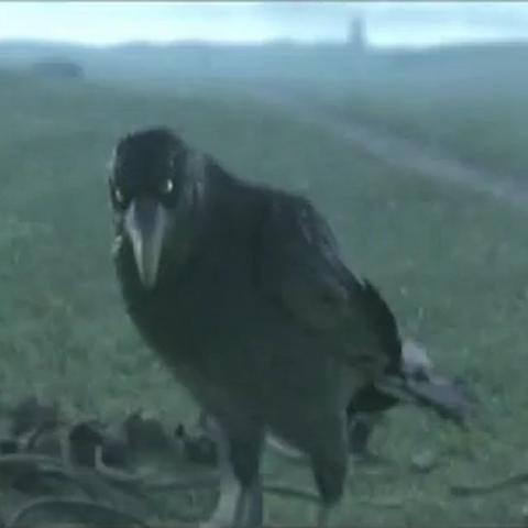 Cuervi: Este cuervo es la mascota de Xkkryb y a la vez es su amuleto de la suerte porque este causa mala suerte al oponente.