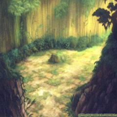 Bosque de Bambúes.